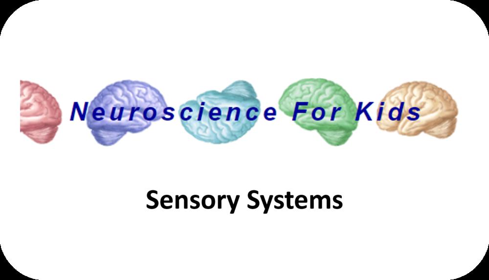 Sensory Systems   13 Uploads