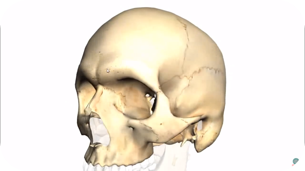 Skull Tutorials   10 Uploads