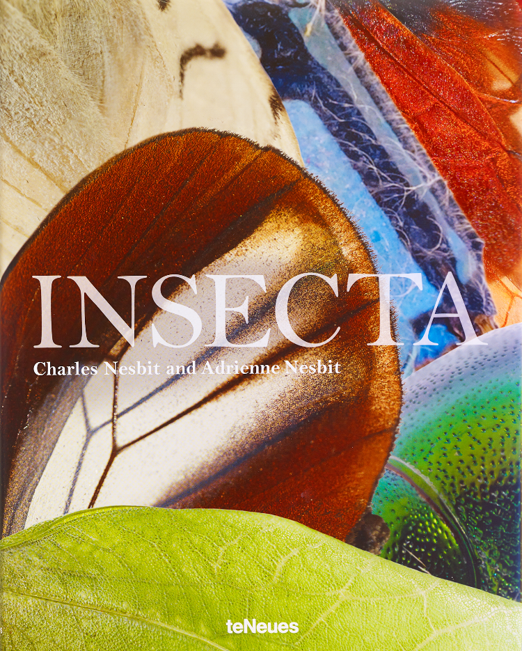 INSECTA COVER copy.png