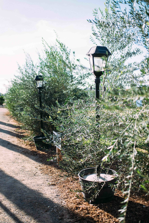 Queen Creek Olive Mill Arizona Wedding_Alyssa Ryan Photography3.jpg