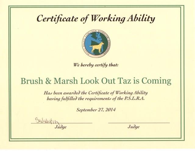 Tazzy    Working Certificate.jpg