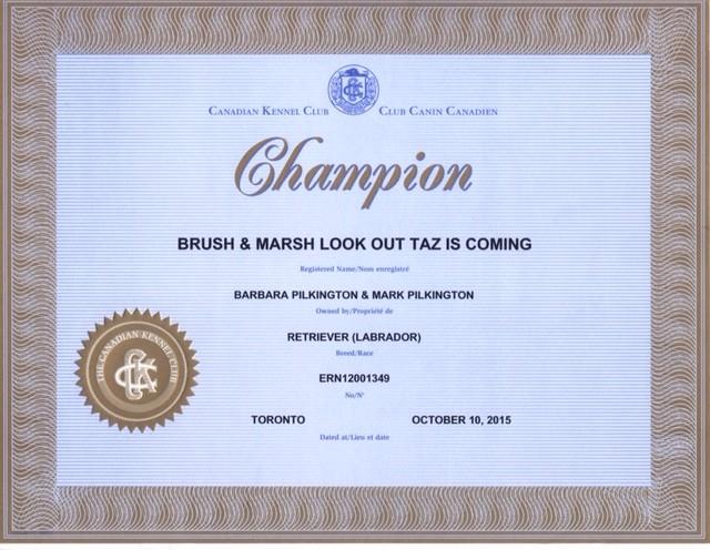 Tazzy Canadian Champion.jpg