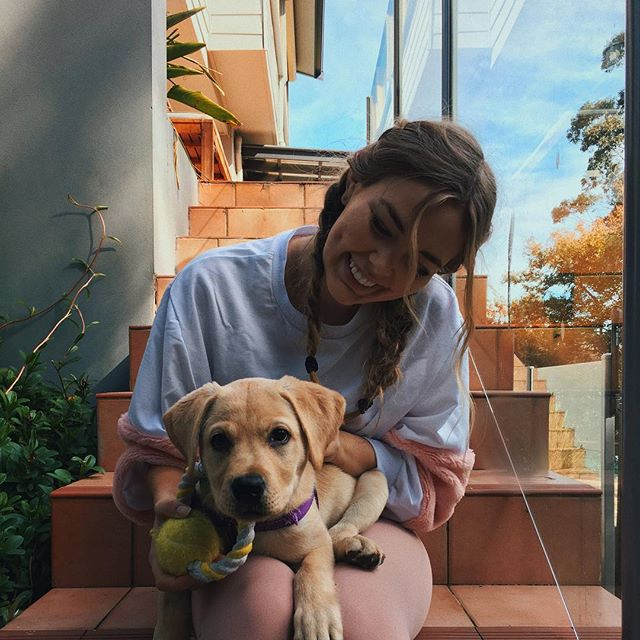 Mornings with Rosie the lab 🐶 Ps. Anyone who really wants a pet but can't get one for any reason, check out @petcloud! So many dog walking/dog sitting and pet feeding jobs! Not sponsored, just want to let everyone know you can get paid to play with animals, it's a good life ❤️