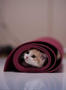 Cats on Mats! -