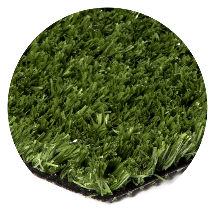 Tanner's-BentGrass-30.png