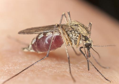 aiken sc mosquito control.jpg