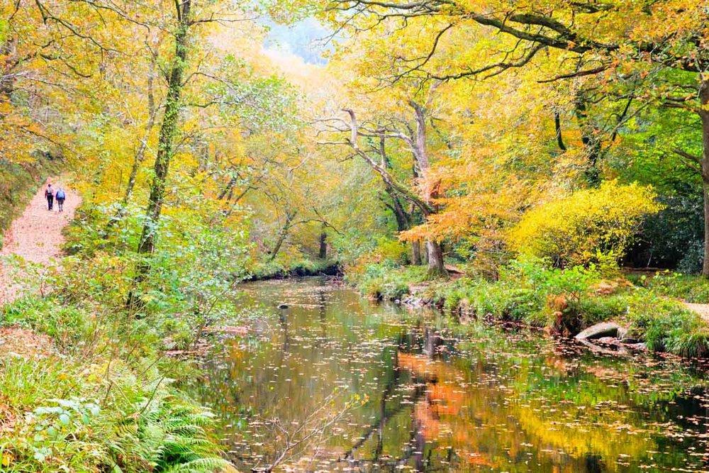 Fingle Gorge, Dartmoor