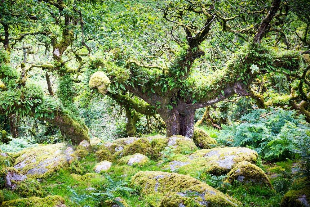 Wiseman's Wood
