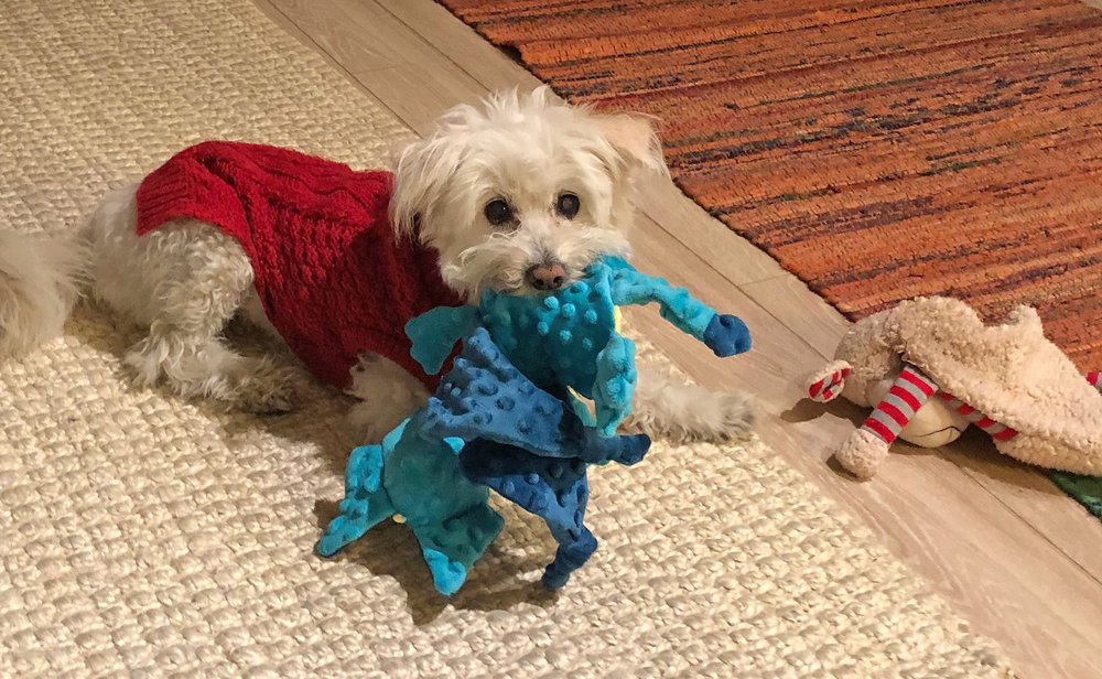 Tammies and her Toys
