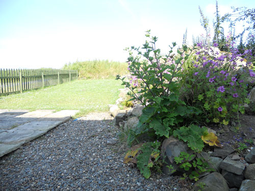 Burnside holiday cottage to let Galloway, enclosed garden.jpg