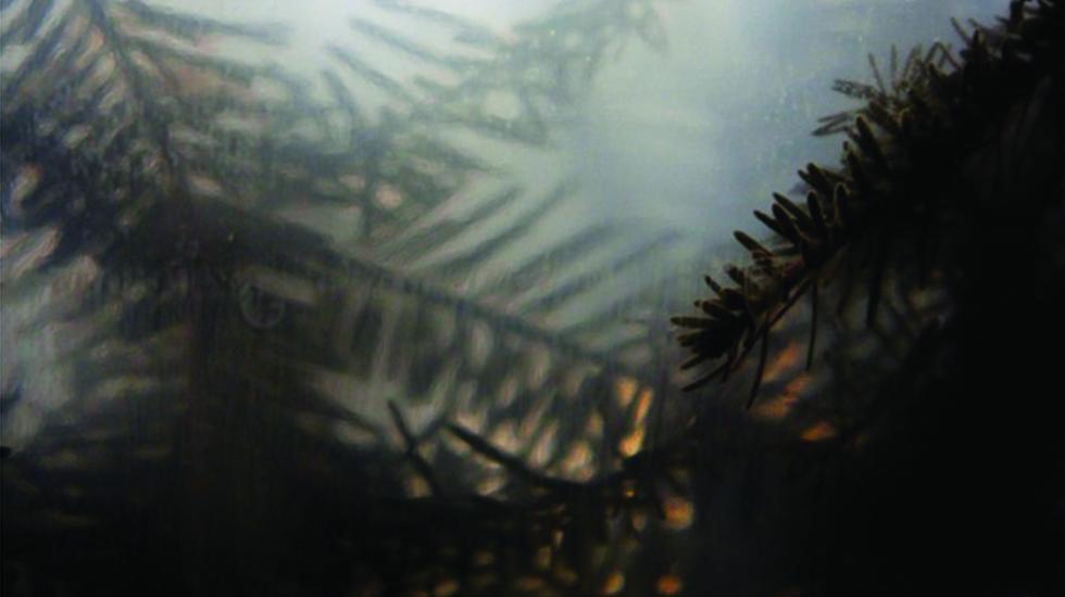 Winter Website Banner 2015