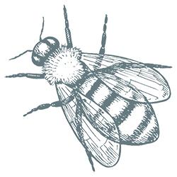 small bee.jpg