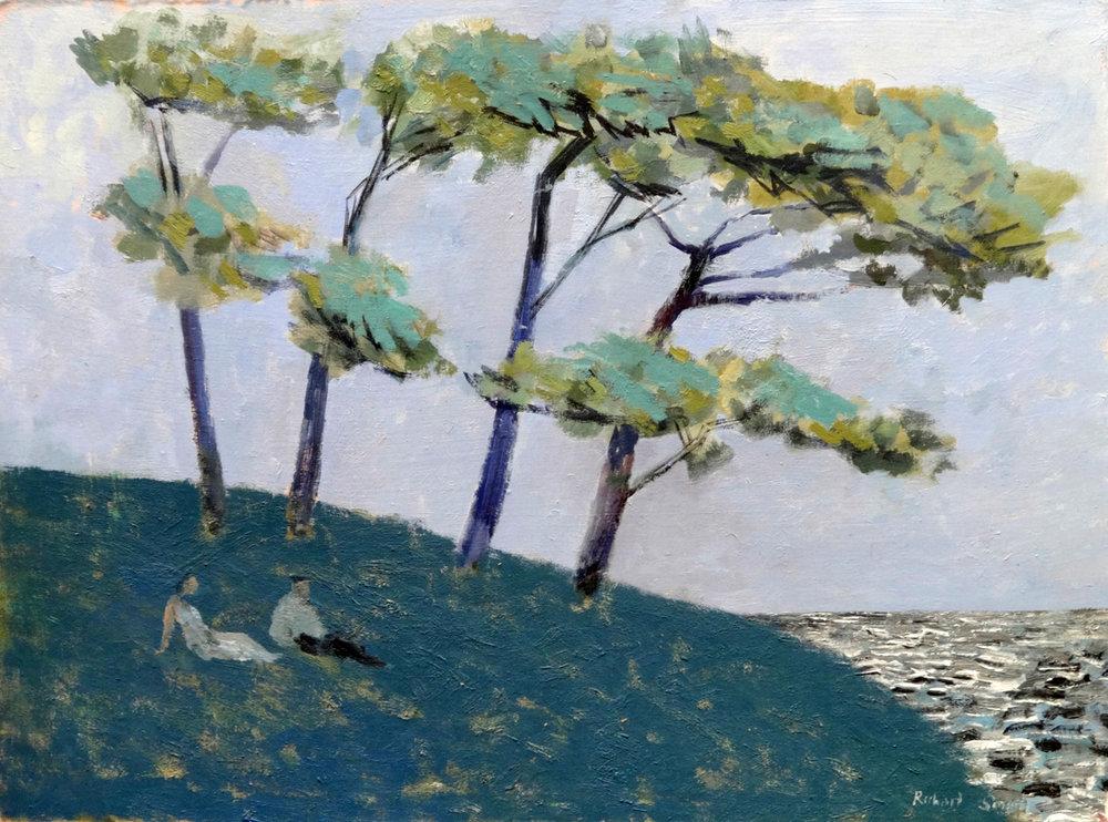 Shore Pines , oil, 46x61cm