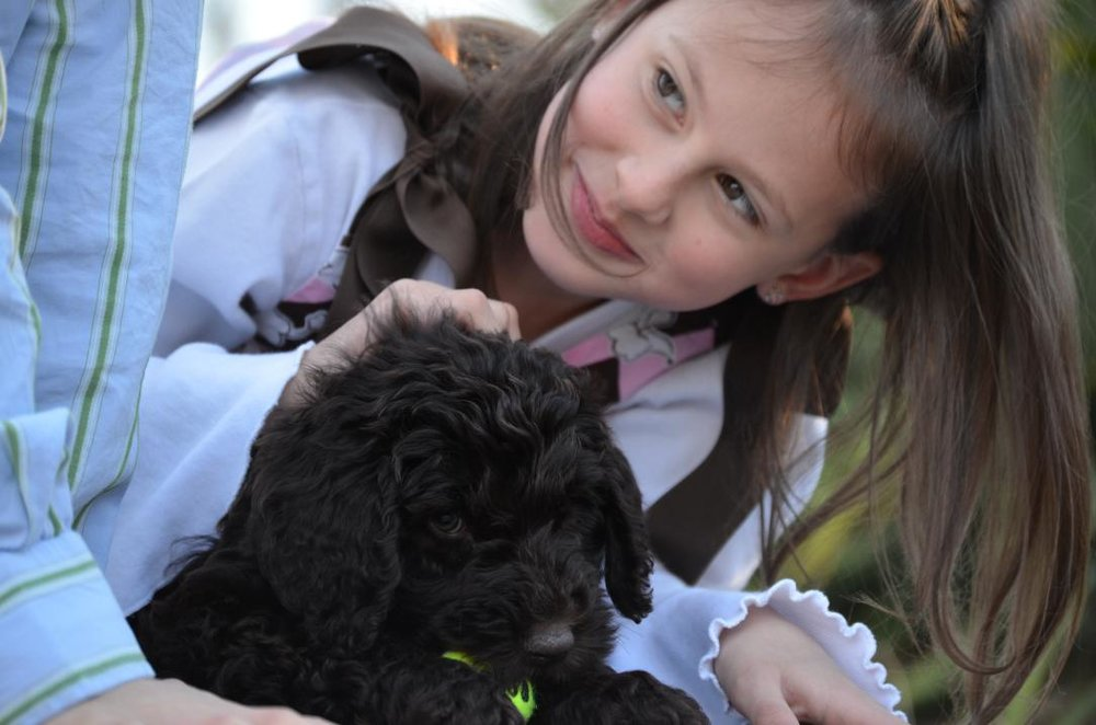Asheville-chocolate-Labradoodle-puppy-54.jpeg