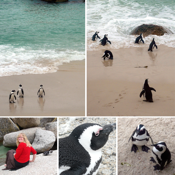 penguincollage