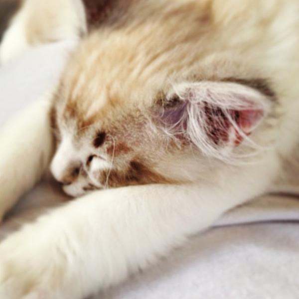 kitten6.jpg