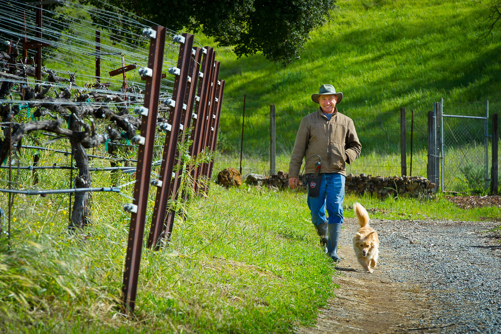 Aver-family-vineyards-gilroy-winery-john-aver-walking-with-dog.jpg