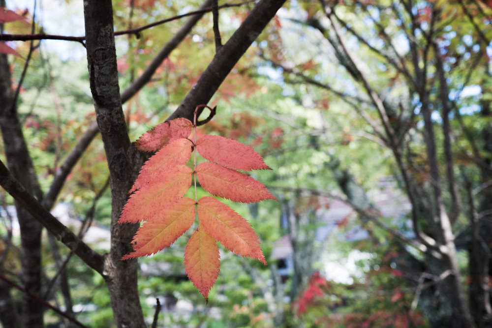 VilmaLuostarinen_TreeCeremony-40.jpg