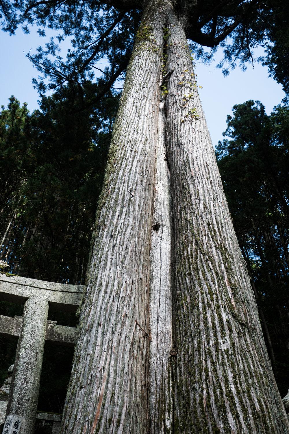 VilmaLuostarinen_TreeCeremony-39.jpg