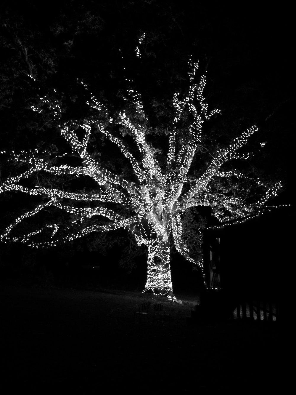 Stella Tree BW.jpg