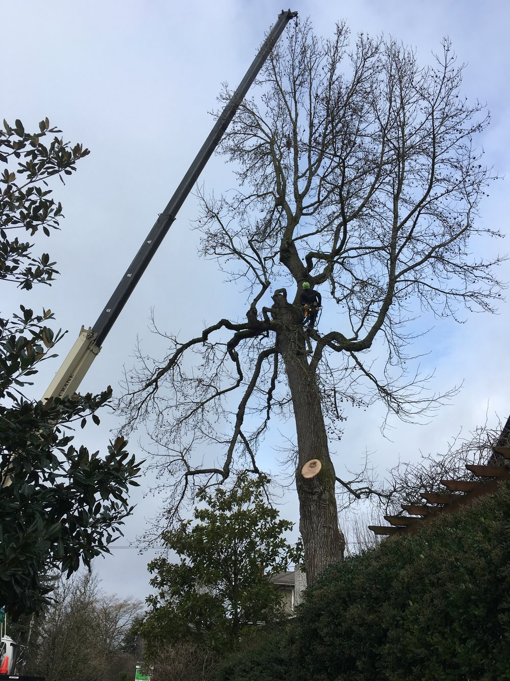 Tree Removal with Crane.jpg