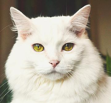 Cat Web 1.jpg