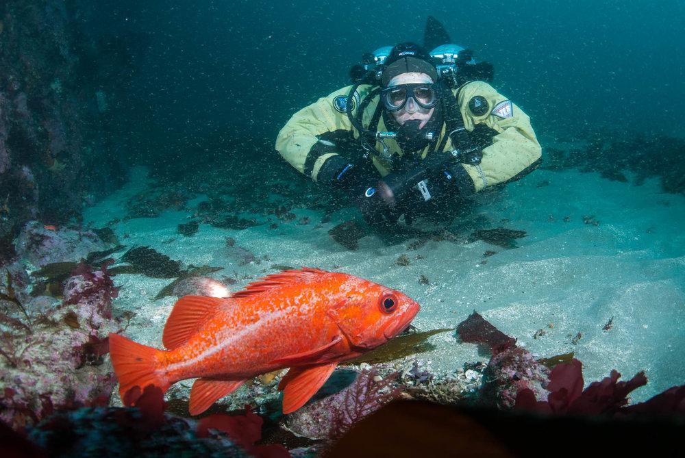 Diver and Vermilion