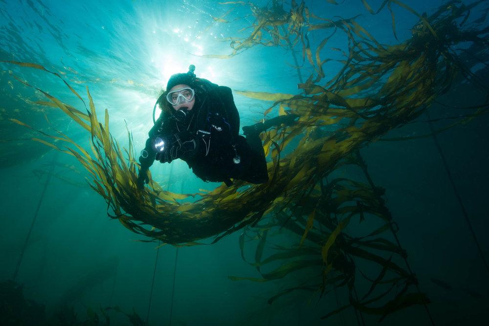 Diver in Bull Kelp