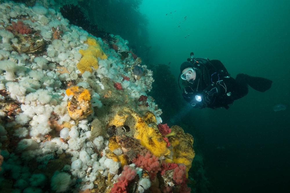 Diving Browning Wall