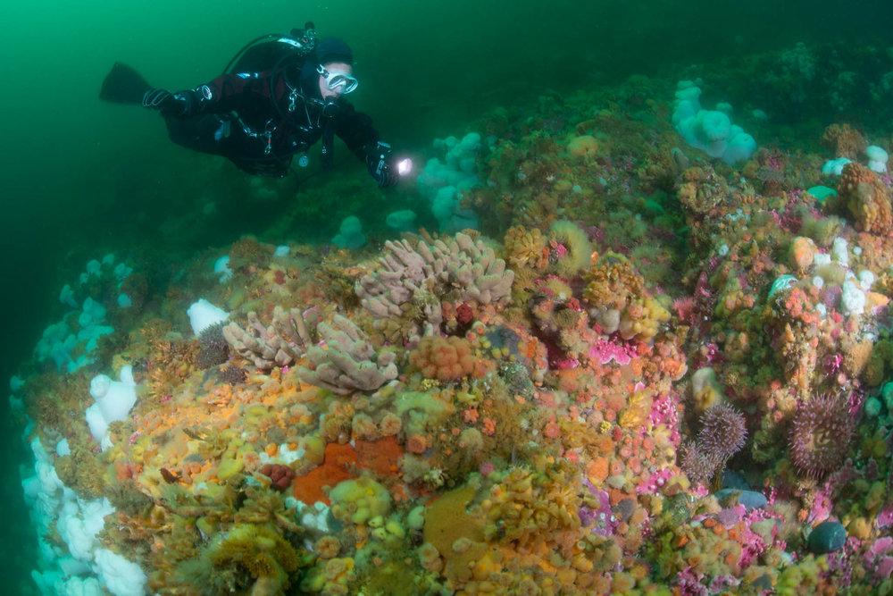 Wooden Island Reef Scene