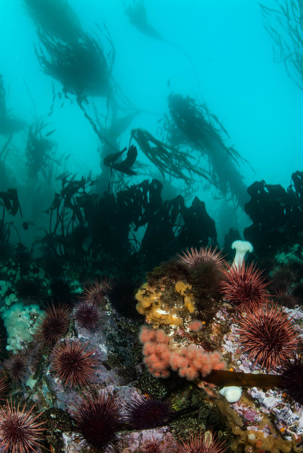 BC Reef Scene