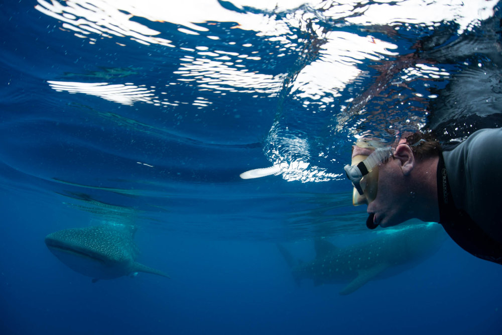 Selfie with Two Whale Sharks