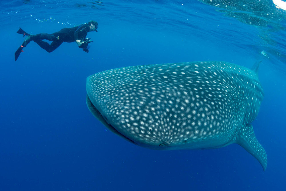 Kevin Ferrero and Whale Shark
