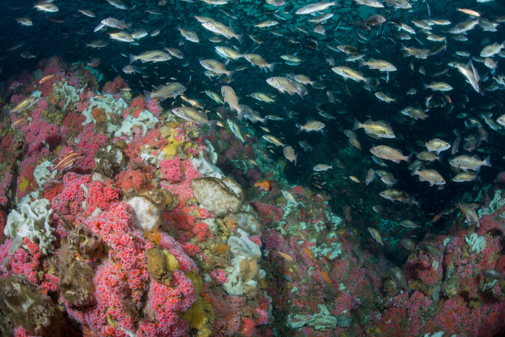 Reef and Rockfish