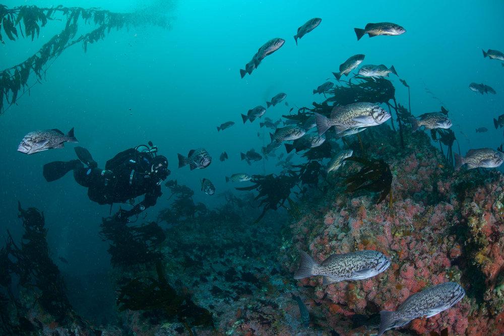 Diver Filming