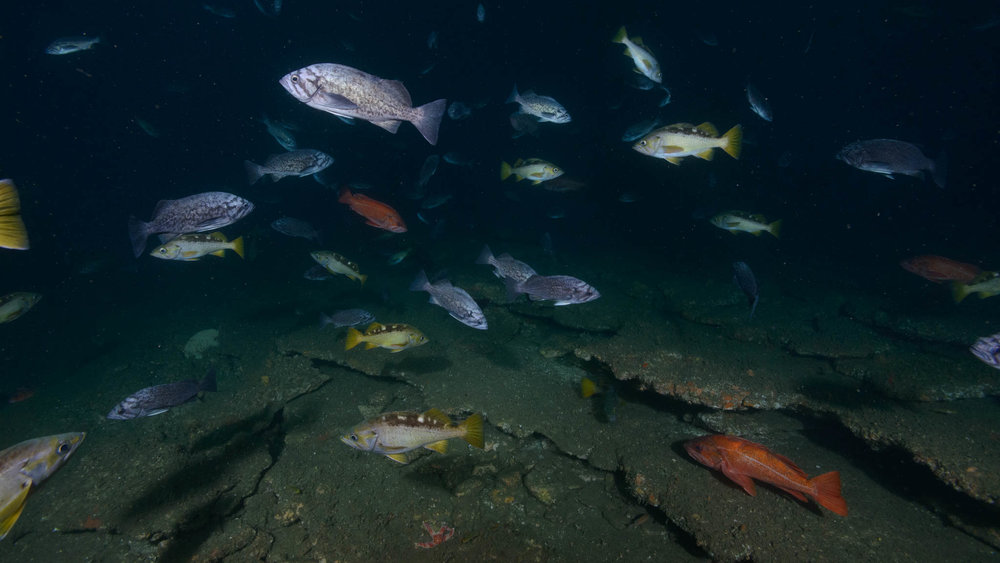 Mixed Rockfish