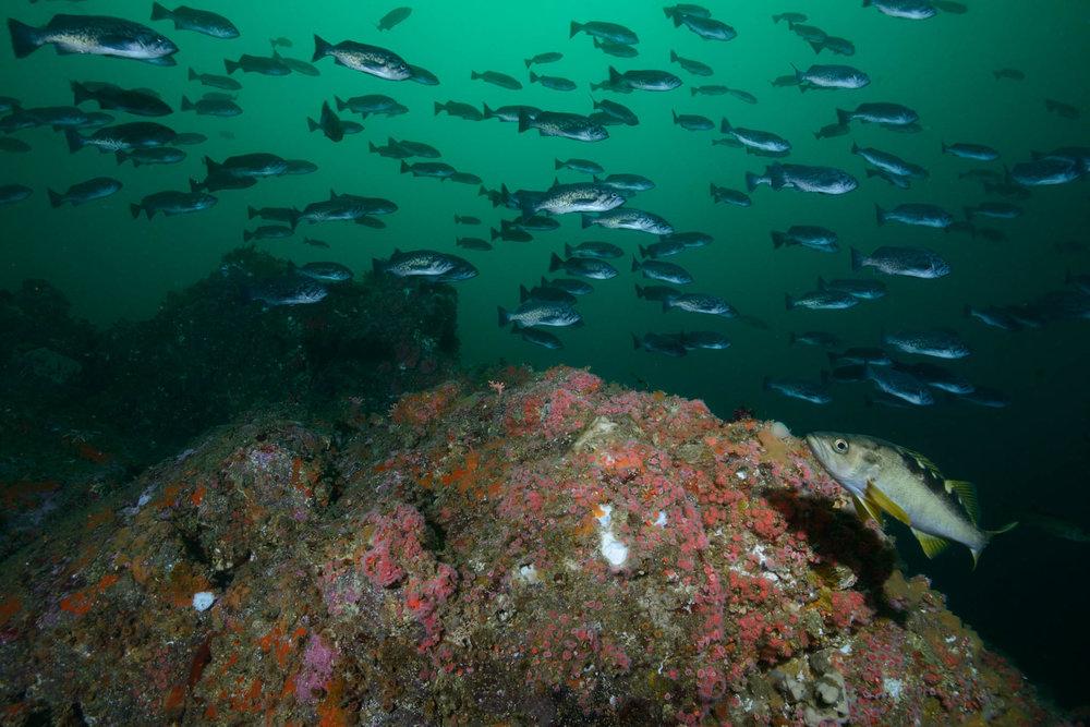 Big Sur Diving