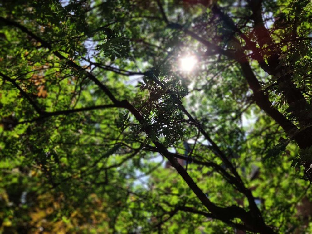 Trees and sun glare in portrait mode