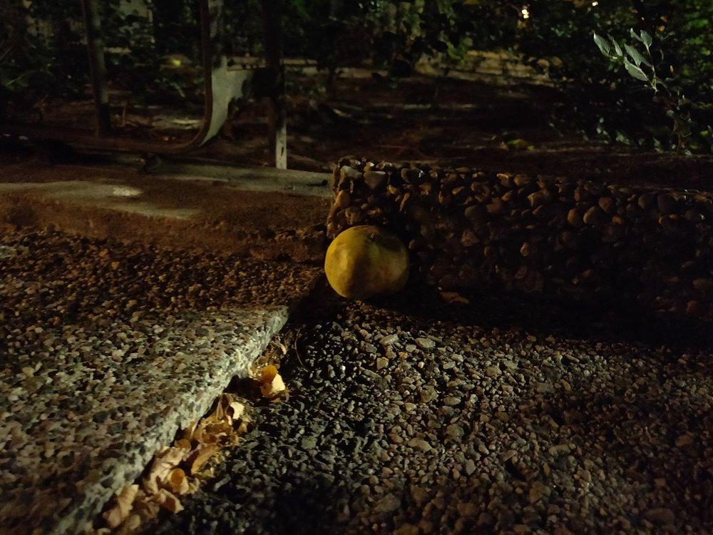 low light apple.jpg