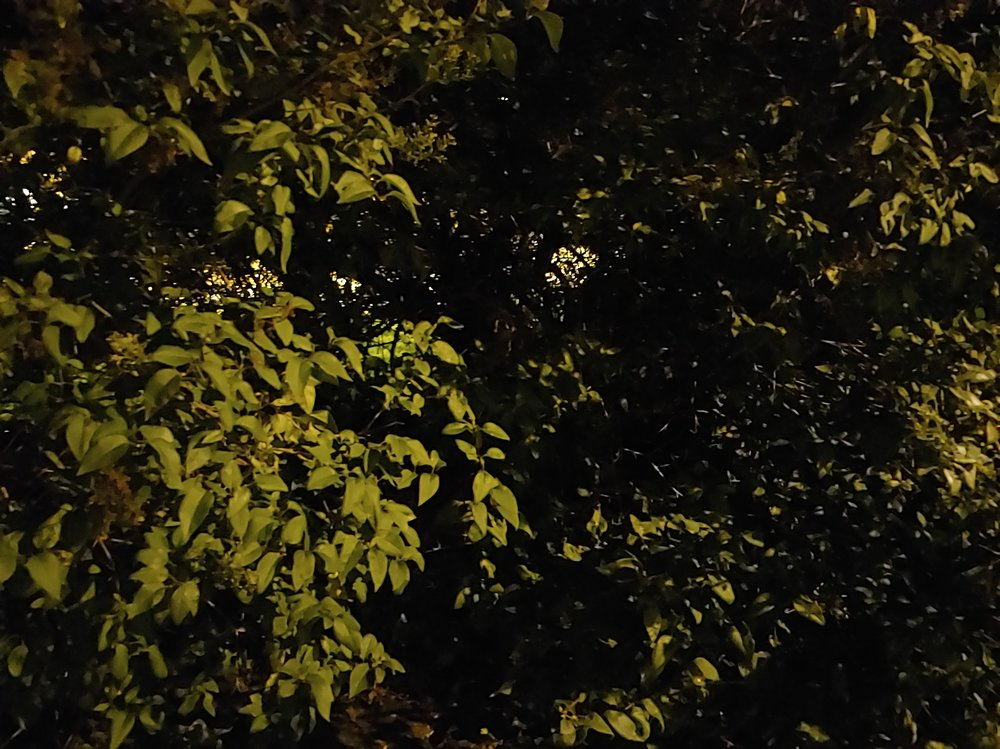 Copy of Night-Mode On