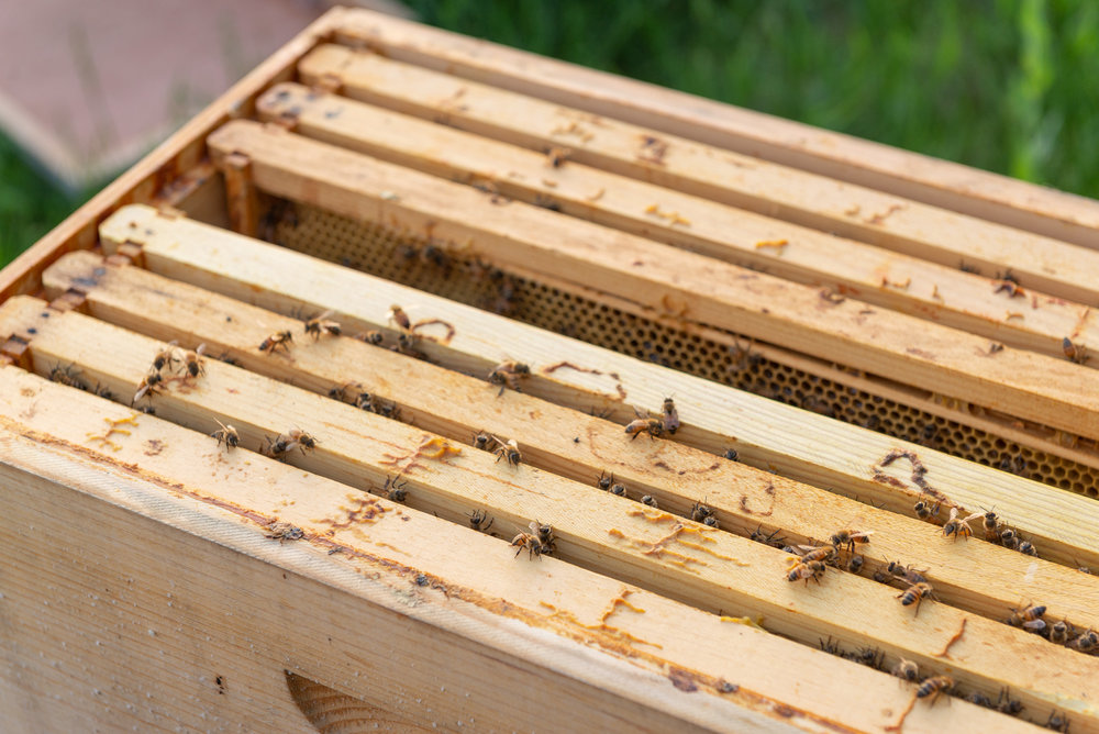 The Wood Hive with a space freed for more borrowed larvae.