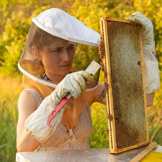 This one's for us! #beekeeping #honeycomb #honey #goldenhour