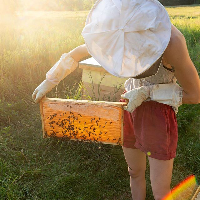 Why do they call it the golden hour? #beekeeping #goldenhour #honey #honeycomb #summer