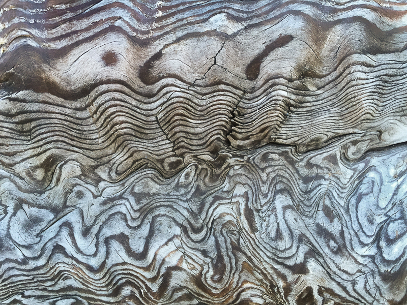 Beach log grain