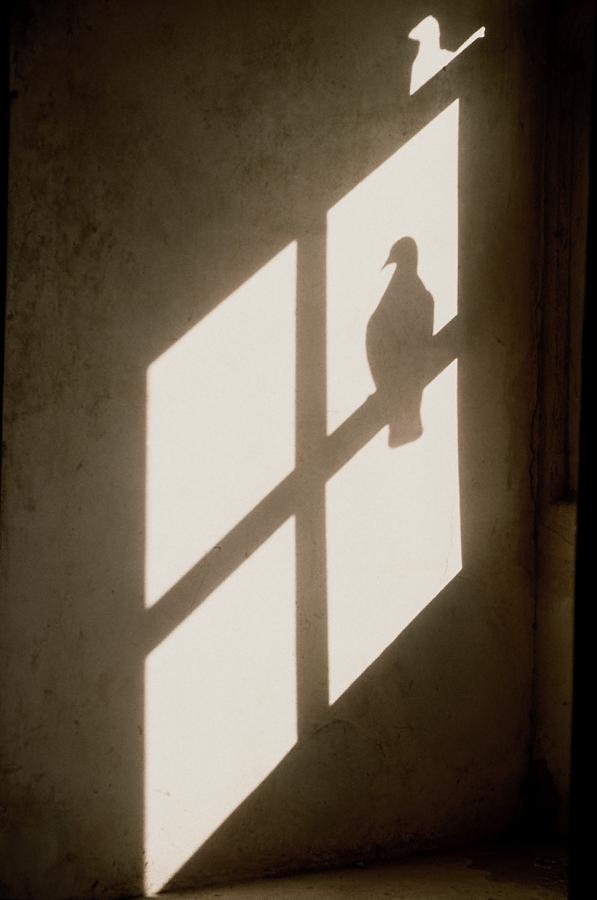 900.054.Pigeon Shadow, single.jpg