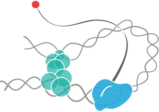 small_RNA.png