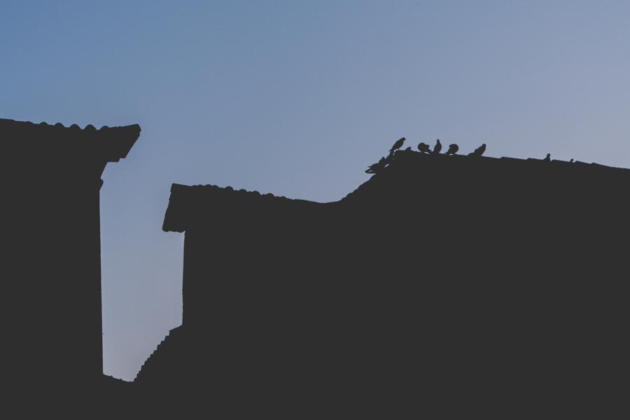 Birds in Omis