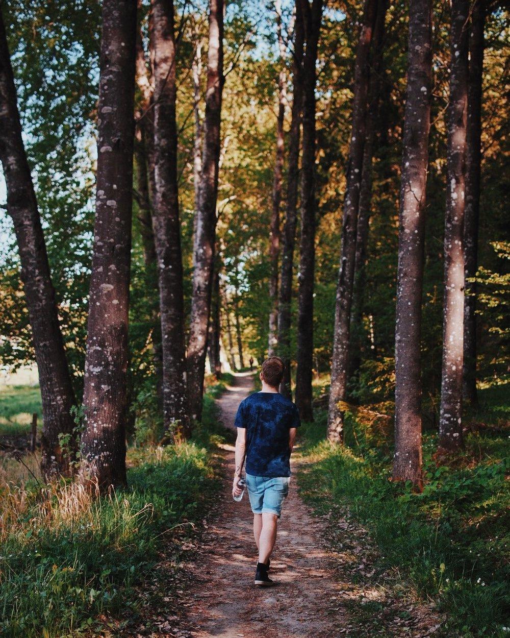 Flemingsbergsskogen.JPG