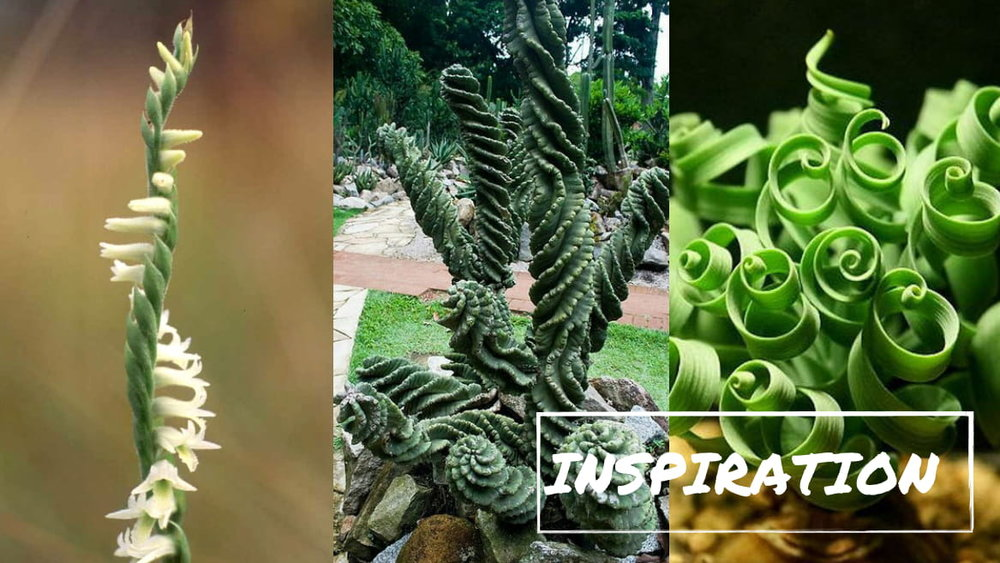 A requirements for this assignment was to be inspired by nature, using bio-mimicry to create an abstract form.