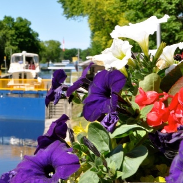 Flowers boats MD.jpg